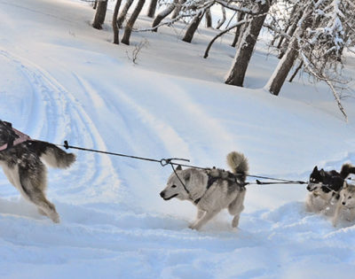 FREE Husky ride if you book Chalet Husky in La Plagne